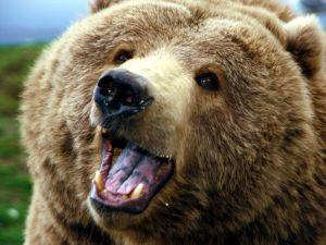 bear-02